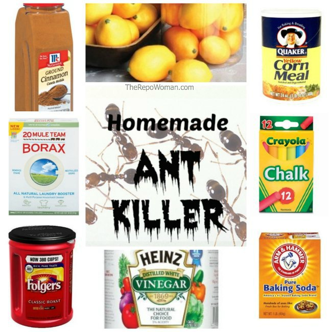 Homemade Ant Killer Recipe