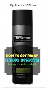 How to get rid of flying insects